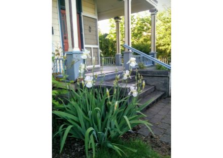 front porch - irises