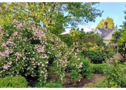 573 rose garden