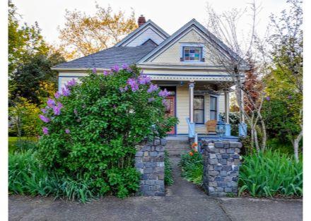 573 lilacs in bloom