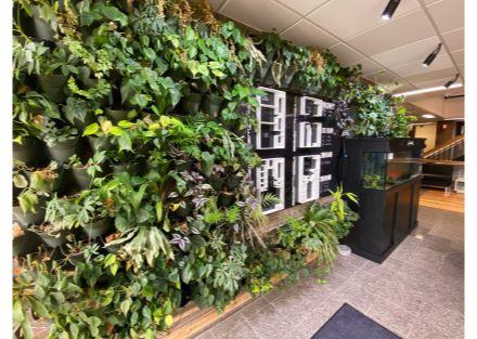 plants 3