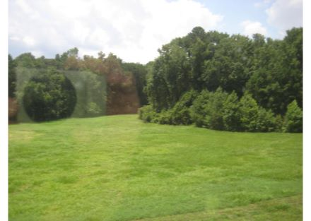 Cypress Green Pictures  (11)